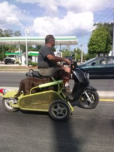 This guy built a custom side car for his Chocolate Lab I see him all the time He's awesome...