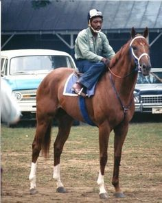 Secretariat before a workout with exercise rider Charlie Davis