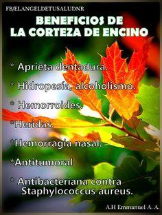 BENEFICIOS CORTEZA DE ENCINO