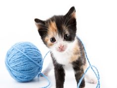 Cats like to eat things they shouldn't. Sometimes linear foreign bodies can become quite problematic and even deadly. Baby Booties Knitting Pattern, Crochet Slipper Pattern, Crochet Slippers, Knitting Patterns, Crochet Patterns, Like A Cat, Happy Today, Free Crochet, Crochet Tops