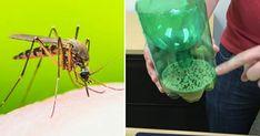 Eroon hyttysistä kesällä – Nerokas ansa, johon tarvitset vain 3 kotoa löytyvää ainesosaa. Newsner tarjoaa uutisia, joilla todella on merkitystä!