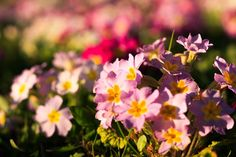 Spring colors by Julie Lafonte