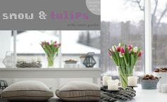 snow & tulips in the winter garden ~