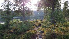 Trail near Gardermoen, Norway