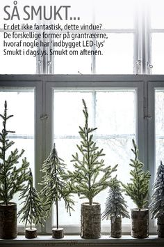 Juletræer - Find små søde juletræer til kreativ julepynt her