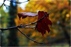 Herbstblätter.... #EssenReisenLeben #Herbst #Autunno #Autumn