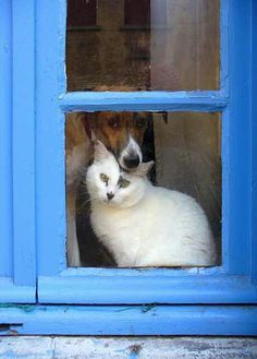 """* * DOG: """" Listen up me kitteh friend. One of these days, de humans will be distracted and both of us willz dash thru de open door. Weez have rights too, and if we wanna go outside, we're gonna ! """""""