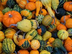 Fall Gourds I Cloth Napkin - autumn gifts templates diy customize Fall Pumpkins, Gourds, Farmers Market, Fall Decor, Seeds, Plants, Autumn, Diy, Templates