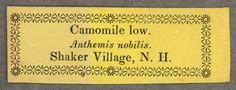 Camomile low. Anthemis nobilis :: Shaker Ephemera