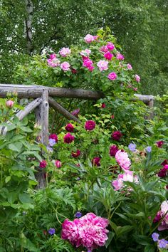 Beautiful Fence Covered With Flowers.