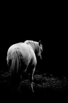White horse photo, black and white horse photo, fine art photo, horse print, horse art, equestrian decor by MitchMcfarlanePhotos on Etsy
