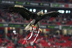 Risultati immagini per benfica Real Madrid, Benfica Wallpaper, Sports Clubs, Big Love, Colorful Wallpaper, Bald Eagle, Football, Soccer, Eagle Wallpaper