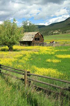 Barn & Country Beauty