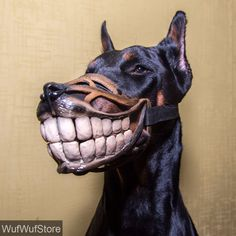 The Werewolf dog muzzle is available in a variety of different sizes: (circumference in cm). Looking for a one-of-a-kind dog muzzle? How 'bout this one here? Black in color, this dog muzzle features a realistic dog nose along with large smile! Puppy Obedience Training, Best Dog Training, Funny Dogs, Funny Animals, Doberman Funny, Doberman Dogs, Doberman Pinscher, Malinois, Dog Muzzle