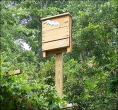 Going Bats!     The Benefits of Bat Houses on Your Homestead
