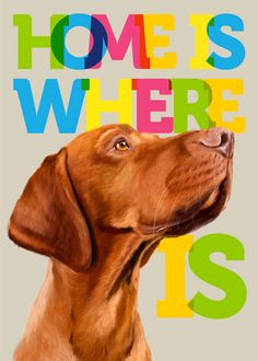Home is where my hungarian magyar vizsla is... (poster 12x16) Illustration fine art print, dog, pet, gift, wall decor, wall art, love on Etsy, $38.00