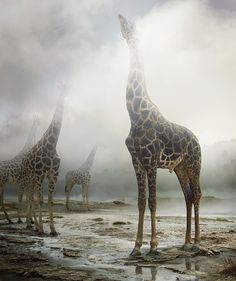Simen Johan - Untitled #172, 2013  From the series Until the Kingdom Comes