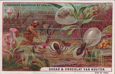 ♥VH2-3-1 WILD CREATURES AND THEIR HOMES VAN HOUTEN CACAO