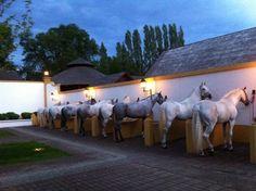 Matías Tornero. Spanish horses.