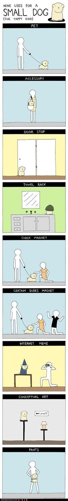 Nine uses for a small dog