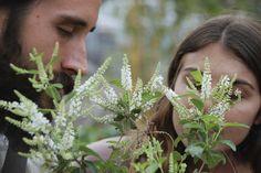 Almond bush in butterfly is super fragrant. Garden designed by Brent Knoll of Knoll Landscape Design