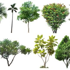 20 Tree PNG Images (Free Cutouts) for Architecture, Landscape, Interior Renderings