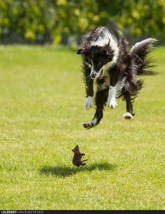 "--dog, "" aaiiiih!!!!!   a MOUSE ""  --mouse "" where, where?????, those things creep me out ! """