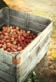 My grandpa has an old press in the barn and makes some fresh apple cider each fall.  He uses 5 kinds of apples to make the best cider you ever tasted ! This box is for the cider ~