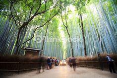 ストックフォト : Bamboo forest in Kyoto, Japan.