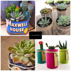Decorar con plantas en latas | Decorar tu casa es facilisimo.com