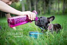 35 Best Sarahann Dog Photography Images On Pinterest Calgary