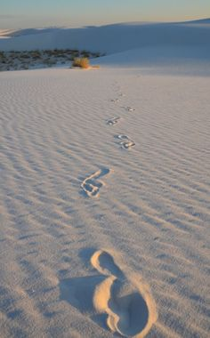 white sands new Mexico #HM