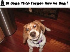 10 Dogs That Forgot How to Dog! (*I don't know why I could only get 8 to display at the site.)
