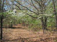 Laura's path, dogwoods in bloom, Rocky Ridge Farm, Mansfield, MO.