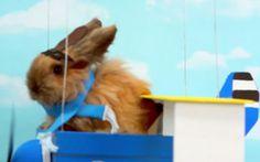 Ce lapin rêve de combats aériens contre des hamsters. Tout va bien.