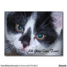 Cute Kitten Portrait Postcard