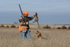 World Class Pheasant Hunting - Aberdeen, SD!
