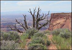 Exploring Dead Horse Point State Park - near Moab Utah