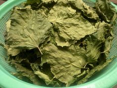 Simple Life: How I Make My Own Mulberry Leaf Tea