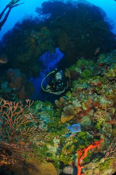 Diving in Grand Cayman. Pictures are thanks to Deep Blue Images