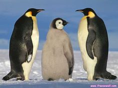 penguins mate for life...soulmates <3