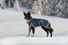 Paddy Pomppa talvitakki suojaa koiraasi loskalta ja pakkaselta. / Paddy Pomppa winter coat keeps your dog warm during winter.