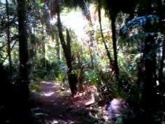 Bush walking in New Zealand