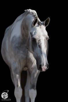 Gray Tobiano.  As this horse ages the gray will whiten leaving little contrast between the gray and white patterns.