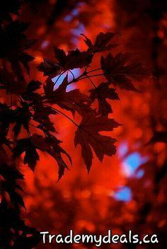 Beautiful autumn....