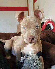 …Oh my goodness this is the cutest puppy ever!!!!!