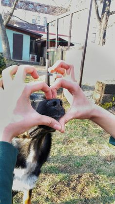 #dog#heart#cute#lovely#cutedog#love#doggy