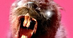 'Zombeavers' Trailer Unleashes an Army of Furry Monsters! -- They're ferocious, they're furry and they're ready to eat you in the full-length trailer for the sure-to-be cult sensation 'Zombeavers'. -- http://www.movieweb.com/zombeavers-trailer-2