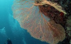 Dive-trip-sipidan Kelp Forest, Cape Town, Scuba Diving, Trips, Travel, Snorkeling, Traveling, Viajes, Diving