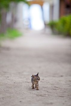 Tiny kitten. Big world.